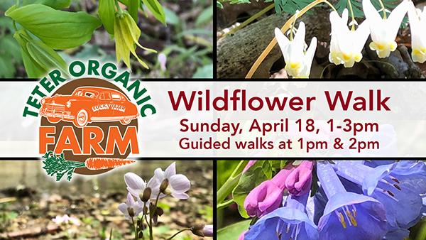 Wildflower Walk | 2021 web-c